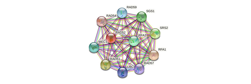 RAD52 protein (Saccharomyces cerevisiae) - STRING interaction network