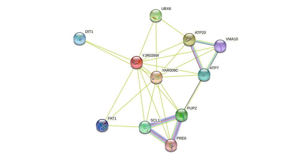 YJR026W protein (Saccharomyces cerevisiae) - STRING interaction network