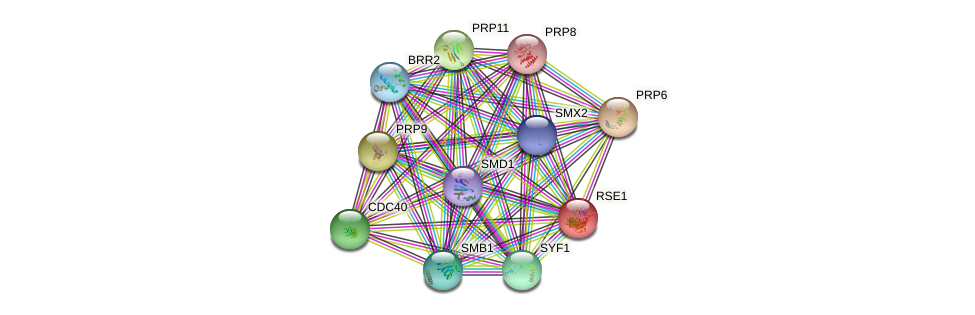 RSE1 protein (Saccharomyces cerevisiae) - STRING interaction network