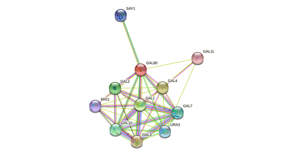 GAL80 protein (Saccharomyces cerevisiae) - STRING interaction network