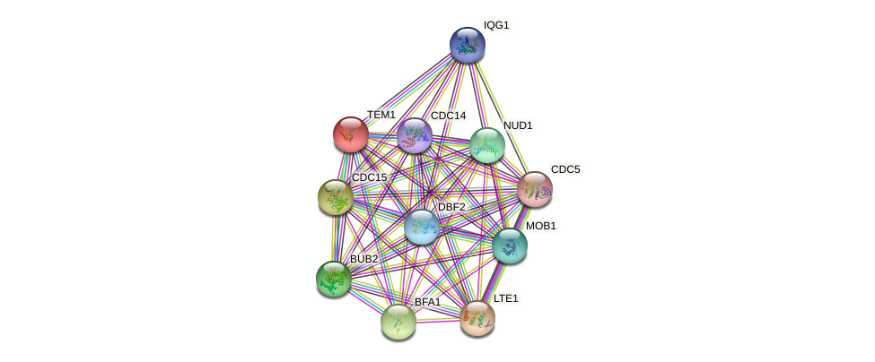 TEM1 protein (Saccharomyces cerevisiae) - STRING interaction network