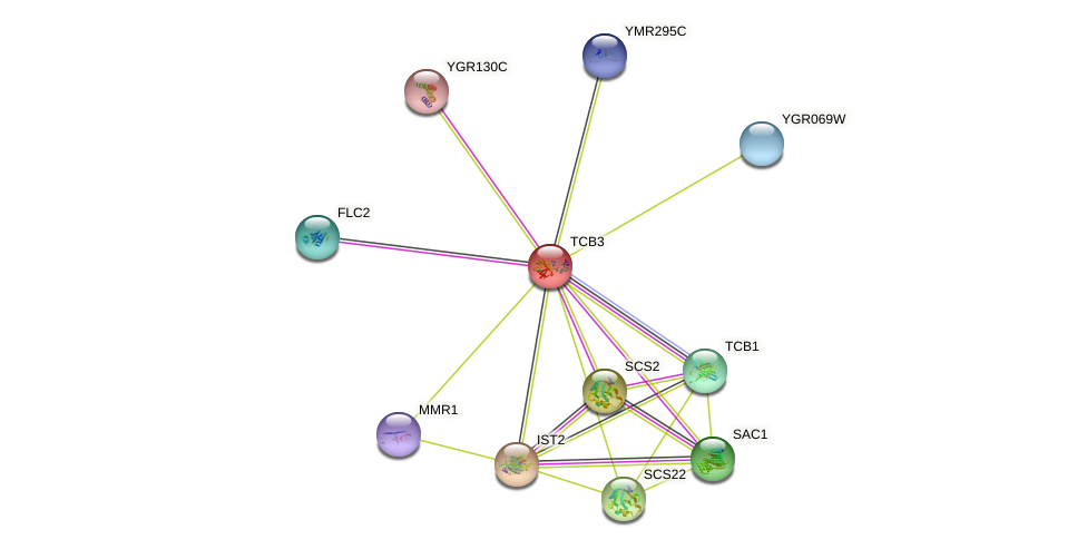 TCB3 protein (Saccharomyces cerevisiae) - STRING interaction network