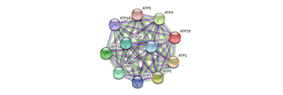 ATP18 protein (Saccharomyces cerevisiae) - STRING interaction network