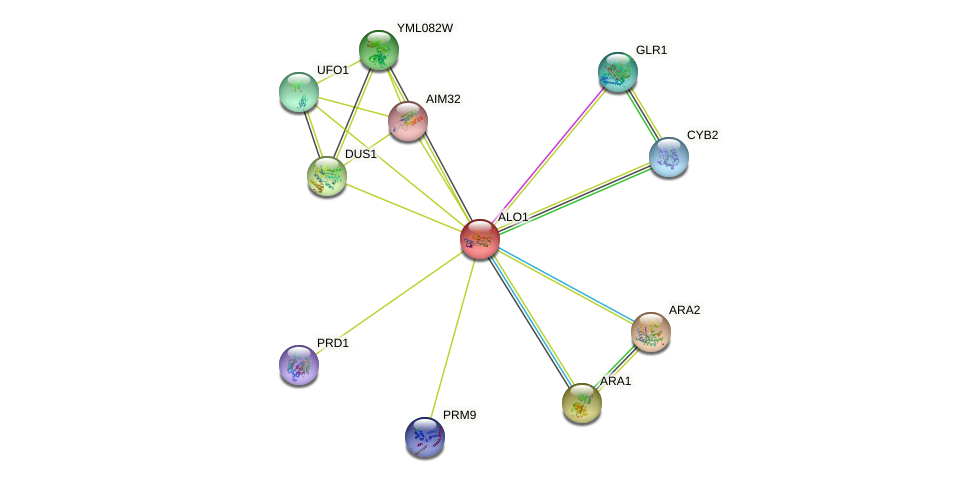 ALO1 protein (Saccharomyces cerevisiae) - STRING interaction network