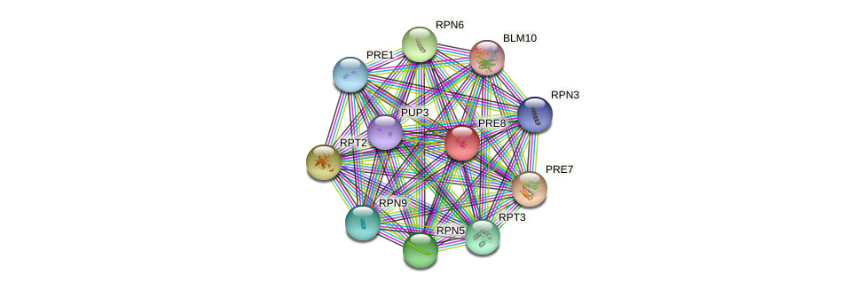 PRE8 protein (Saccharomyces cerevisiae) - STRING interaction network
