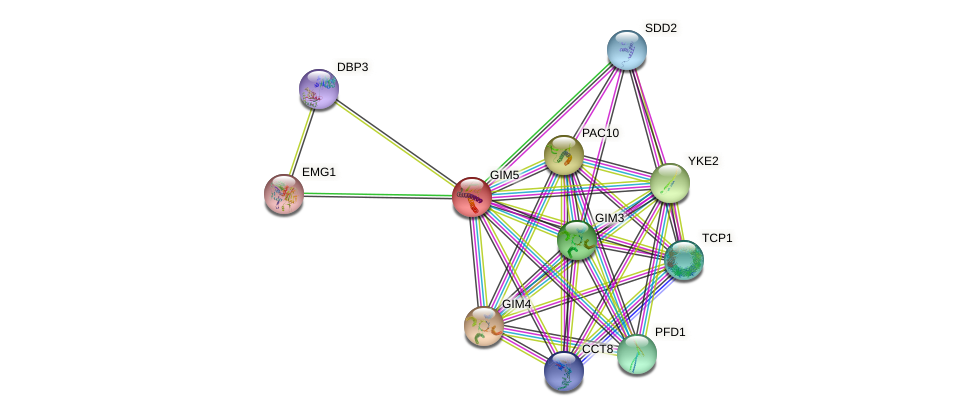 GIM5 protein (Saccharomyces cerevisiae) - STRING interaction network