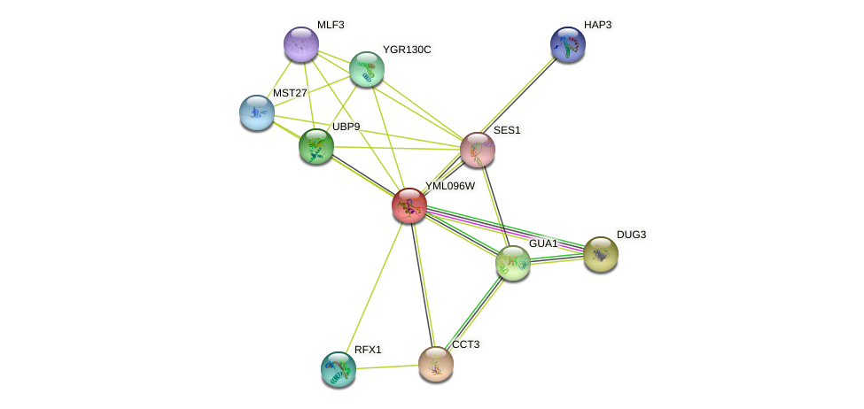 YML096W protein (Saccharomyces cerevisiae) - STRING interaction network
