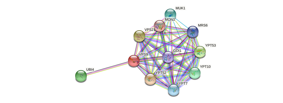 VPS9 protein (Saccharomyces cerevisiae) - STRING interaction network