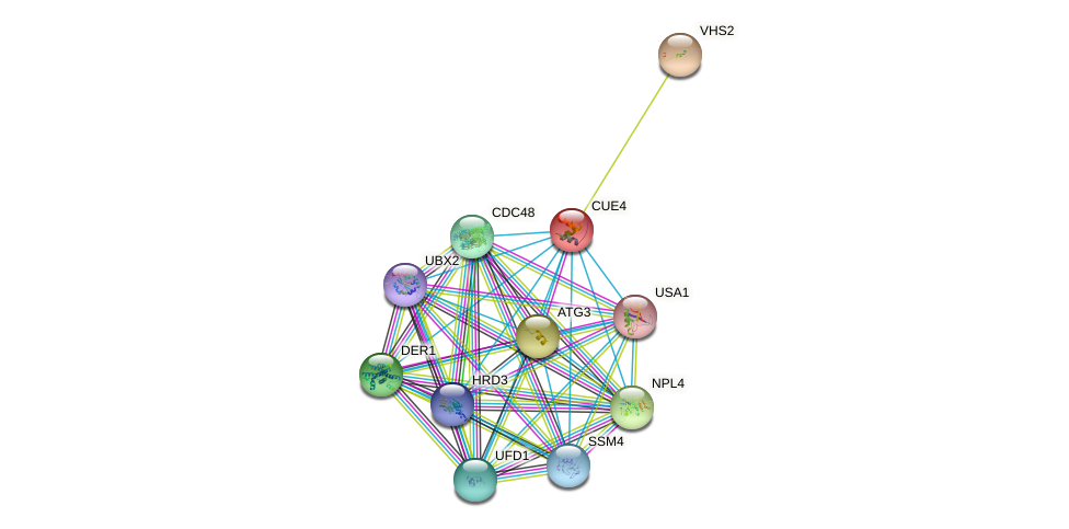 CUE4 protein (Saccharomyces cerevisiae) - STRING interaction network