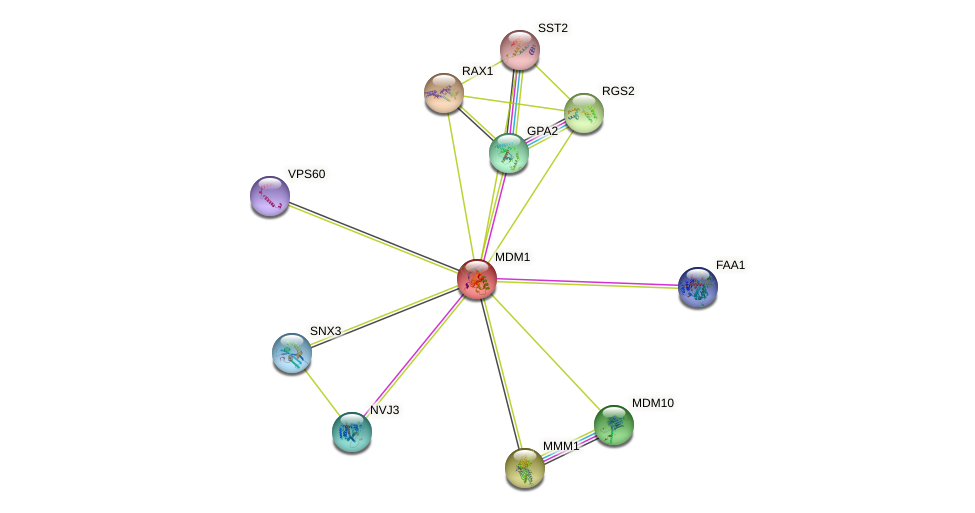 MDM1 protein (Saccharomyces cerevisiae) - STRING interaction network