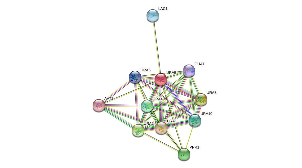 URA5 protein (Saccharomyces cerevisiae) - STRING interaction network