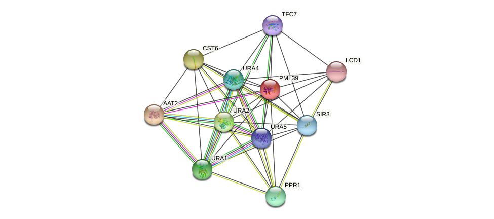 PML39 protein (Saccharomyces cerevisiae) - STRING interaction network
