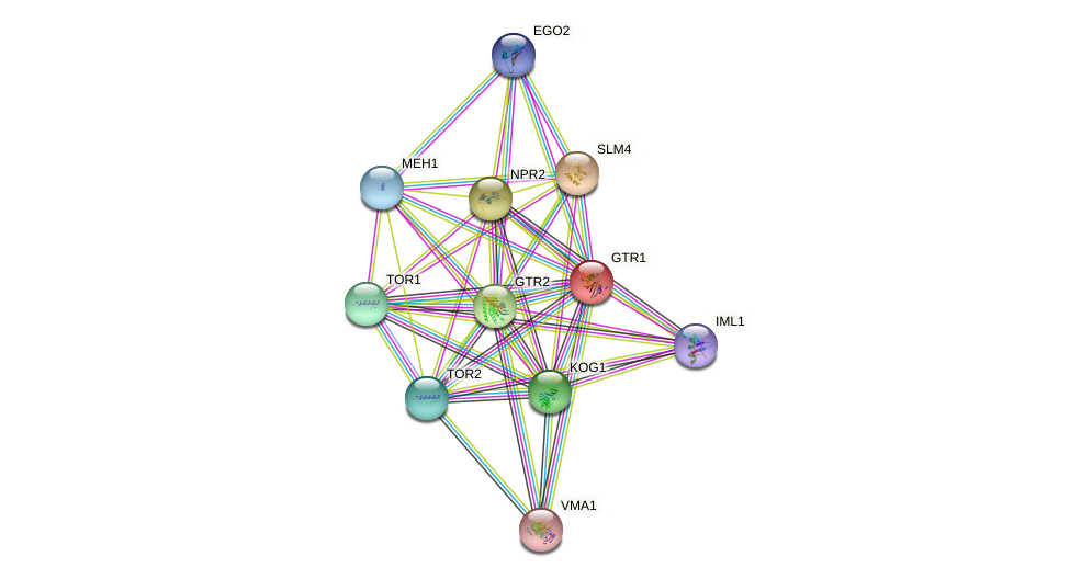 GTR1 protein (Saccharomyces cerevisiae) - STRING interaction network