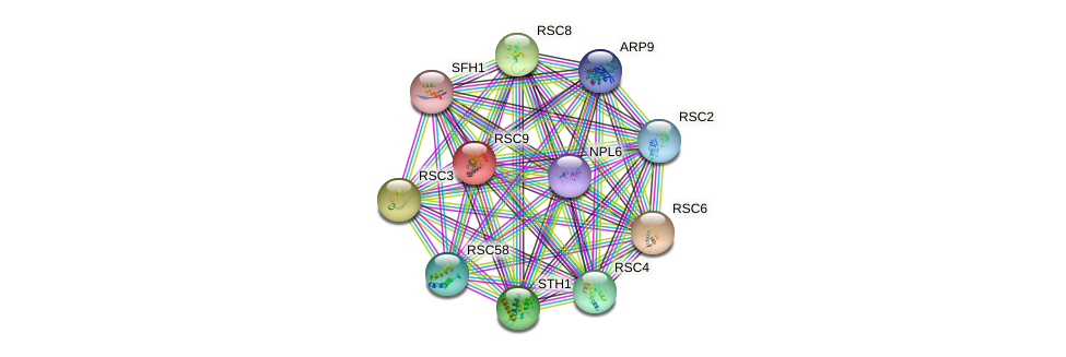 RSC9 protein (Saccharomyces cerevisiae) - STRING interaction network