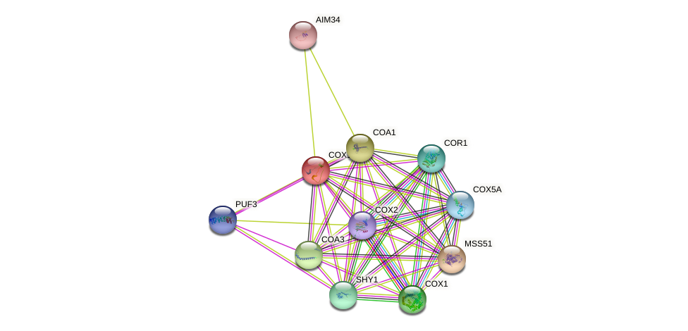 COX14 protein (Saccharomyces cerevisiae) - STRING interaction network