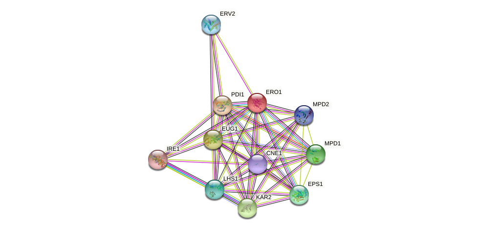 ERO1 protein (Saccharomyces cerevisiae) - STRING interaction network