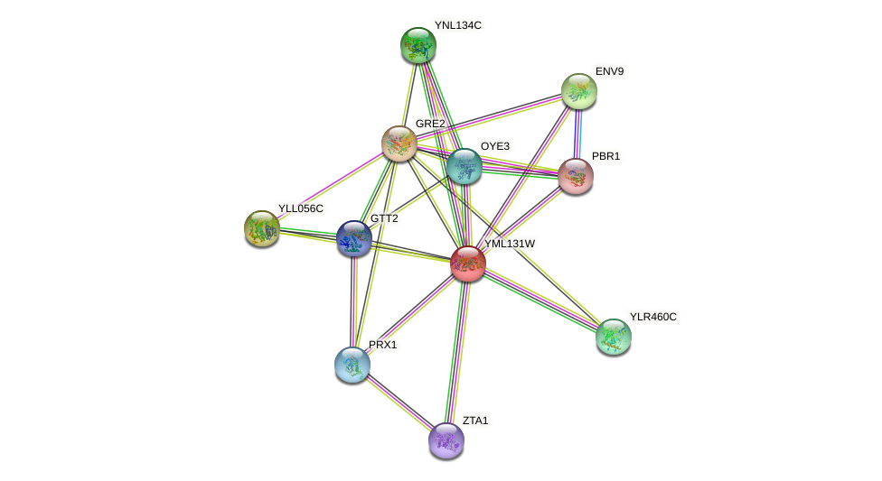 YML131W protein (Saccharomyces cerevisiae) - STRING interaction network