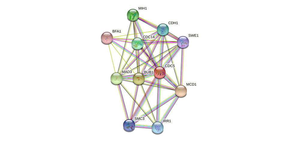 CDC5 protein (Saccharomyces cerevisiae) - STRING interaction network