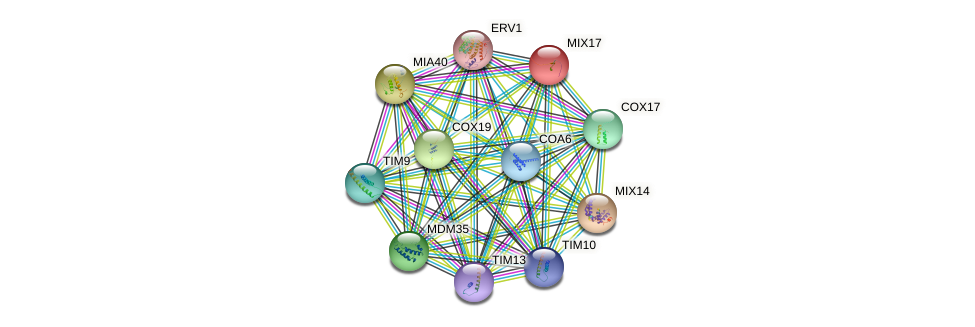 MIX17 protein (Saccharomyces cerevisiae) - STRING interaction network