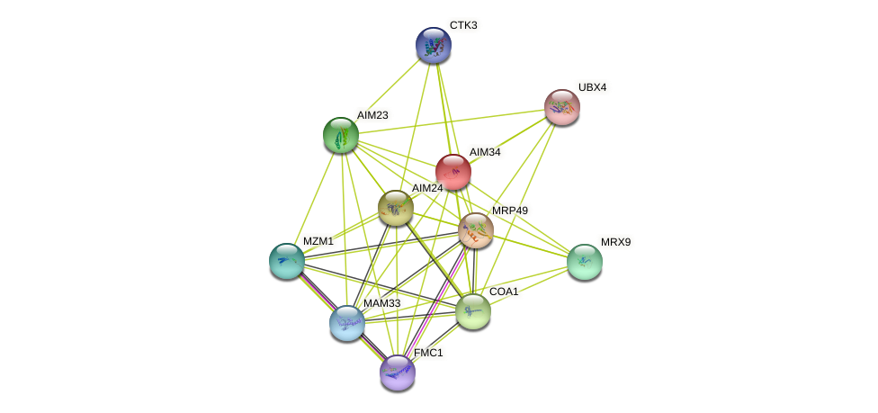 AIM34 protein (Saccharomyces cerevisiae) - STRING interaction network