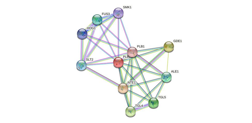 PLB2 protein (Saccharomyces cerevisiae) - STRING interaction network