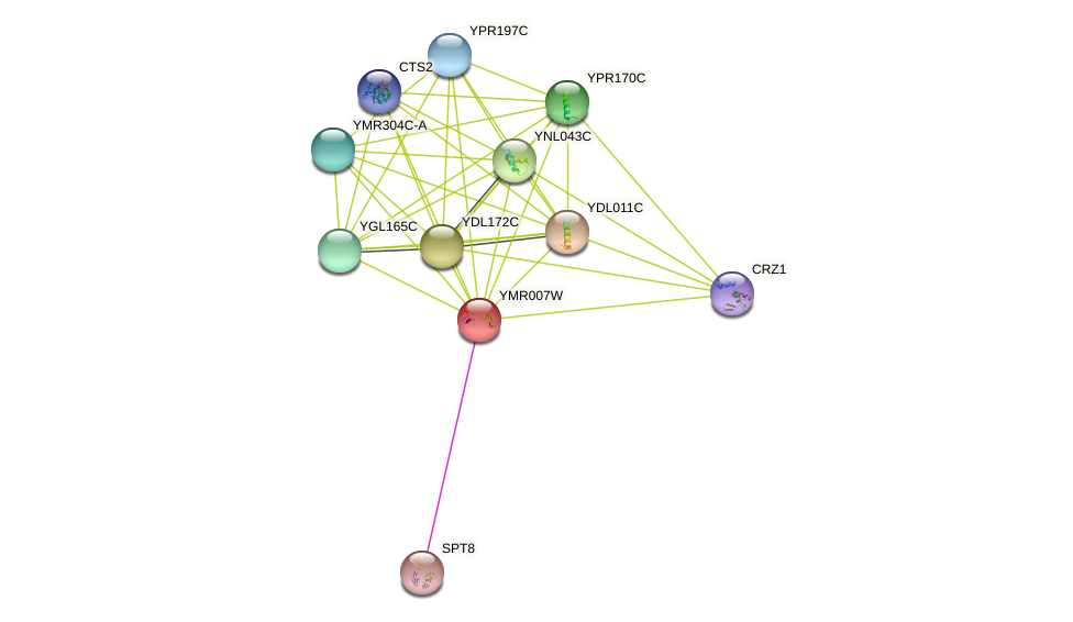 YMR007W protein (Saccharomyces cerevisiae) - STRING interaction network