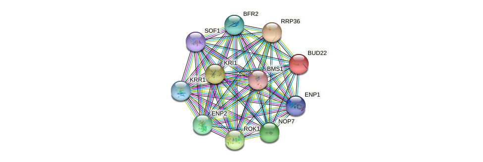 BUD22 protein (Saccharomyces cerevisiae) - STRING interaction network