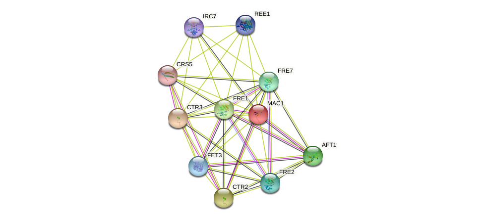 MAC1 protein (Saccharomyces cerevisiae) - STRING interaction network