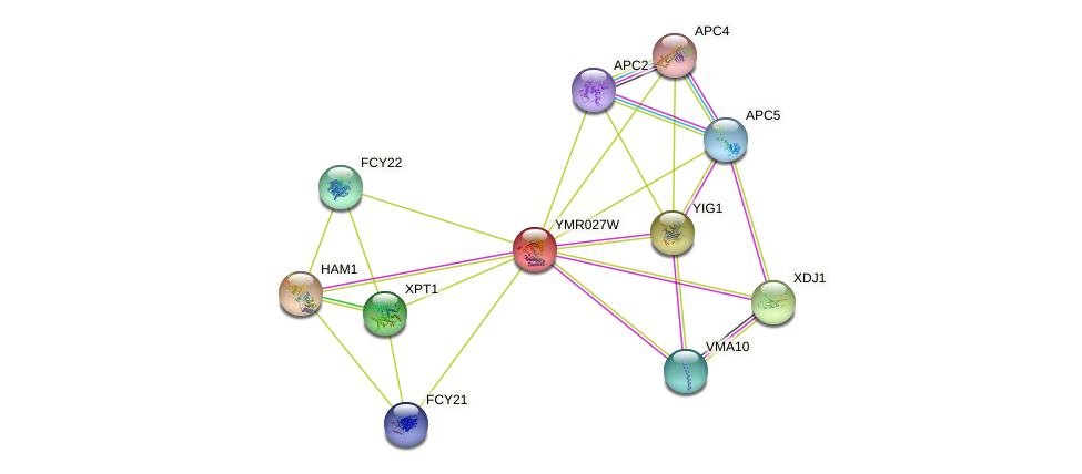 YMR027W protein (Saccharomyces cerevisiae) - STRING interaction network