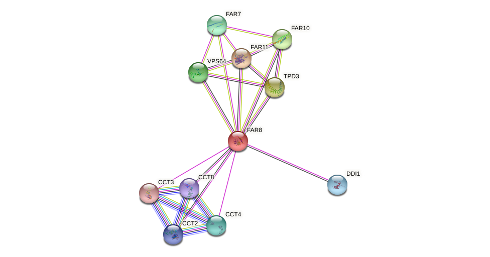 FAR8 protein (Saccharomyces cerevisiae) - STRING interaction network