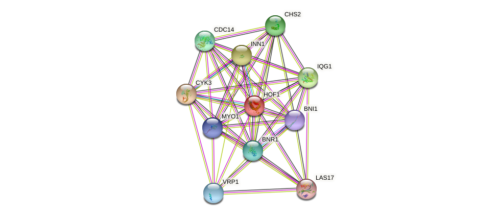 HOF1 protein (Saccharomyces cerevisiae) - STRING interaction network