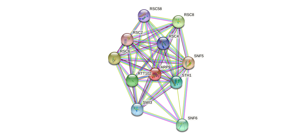 ARP9 protein (Saccharomyces cerevisiae) - STRING interaction network