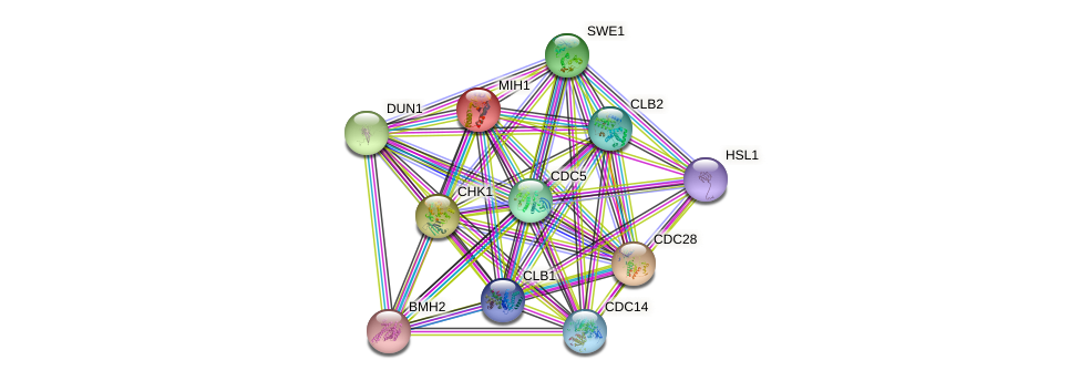 MIH1 protein (Saccharomyces cerevisiae) - STRING interaction network