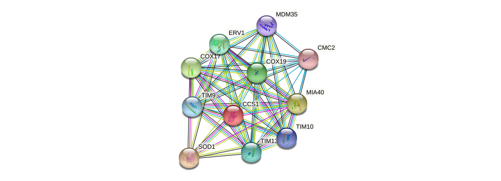 CCS1 protein (Saccharomyces cerevisiae) - STRING interaction network