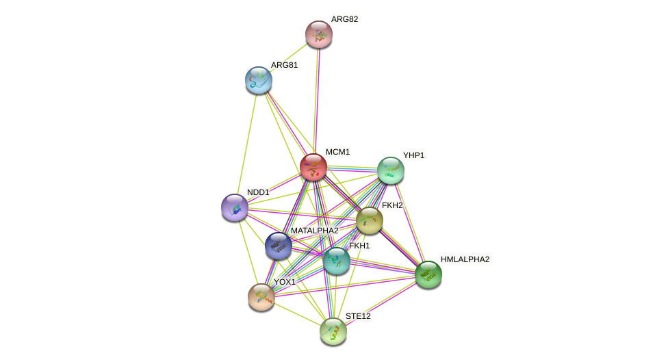MCM1 protein (Saccharomyces cerevisiae) - STRING interaction network