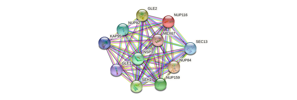 NUP116 protein (Saccharomyces cerevisiae) - STRING interaction network
