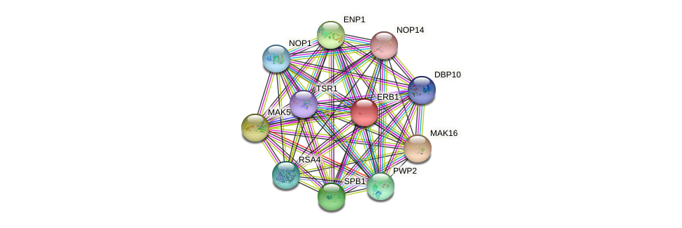 ERB1 protein (Saccharomyces cerevisiae) - STRING interaction network