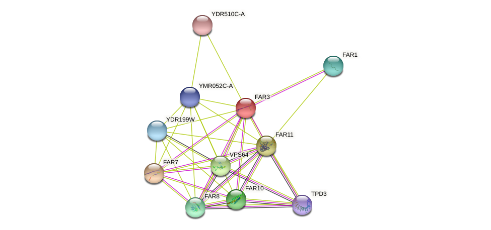 FAR3 protein (Saccharomyces cerevisiae) - STRING interaction network