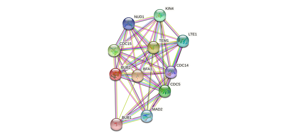 BUB2 protein (Saccharomyces cerevisiae) - STRING interaction network
