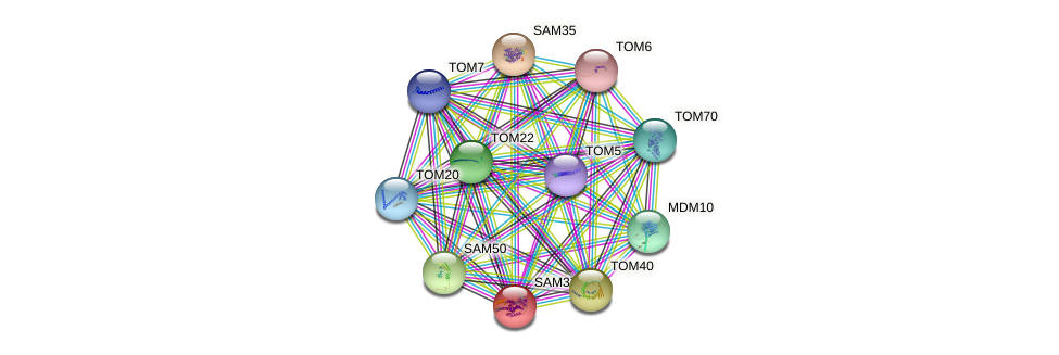SAM37 protein (Saccharomyces cerevisiae) - STRING interaction network