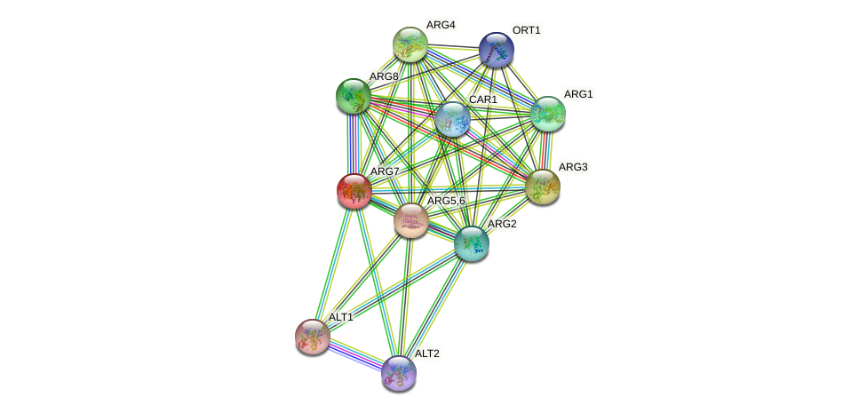 ARG7 protein (Saccharomyces cerevisiae) - STRING interaction network