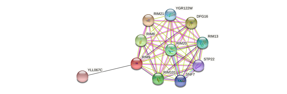 RIM9 protein (Saccharomyces cerevisiae) - STRING interaction network