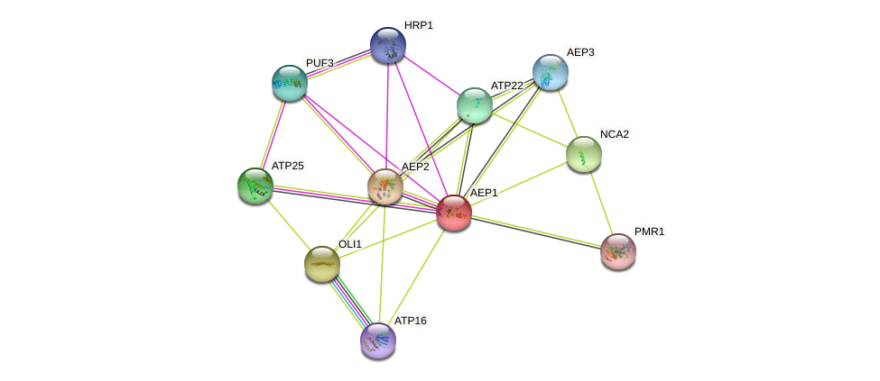 AEP1 protein (Saccharomyces cerevisiae) - STRING interaction network