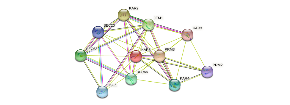 KAR5 protein (Saccharomyces cerevisiae) - STRING interaction network