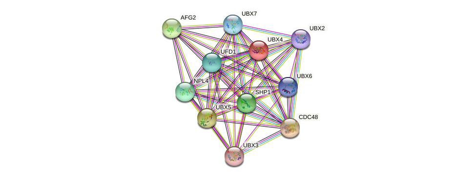 UBX4 protein (Saccharomyces cerevisiae) - STRING interaction network