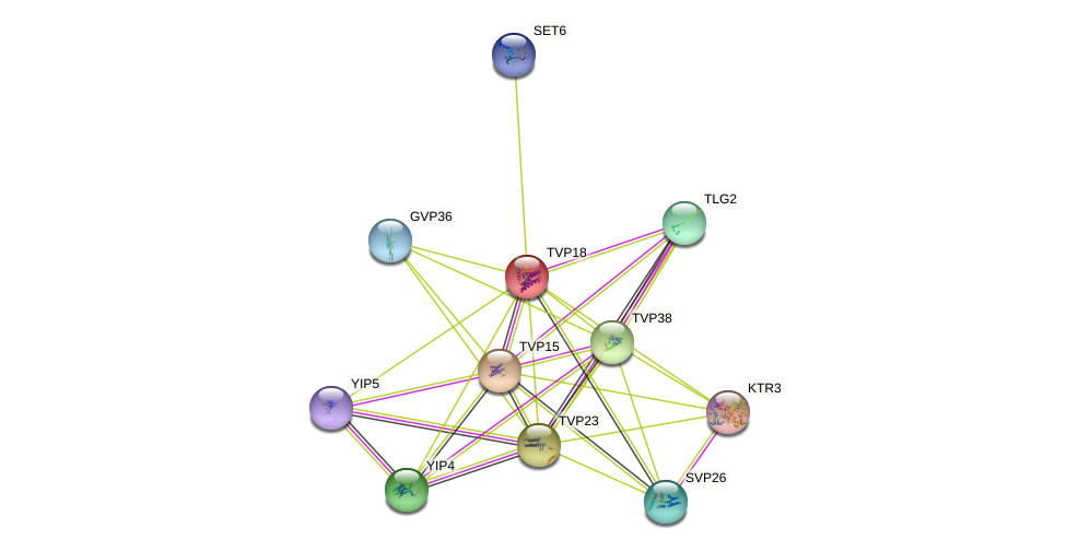 TVP18 protein (Saccharomyces cerevisiae) - STRING interaction network
