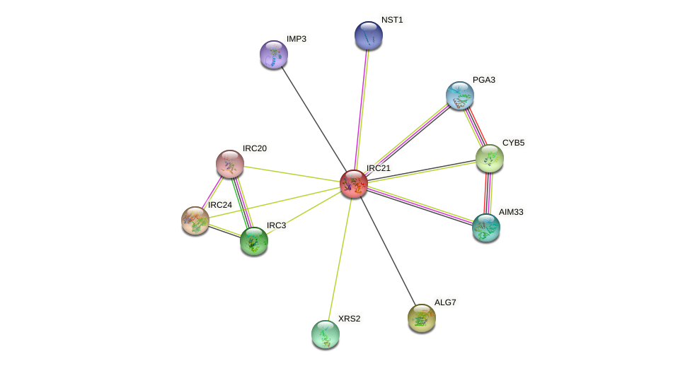 IRC21 protein (Saccharomyces cerevisiae) - STRING interaction network