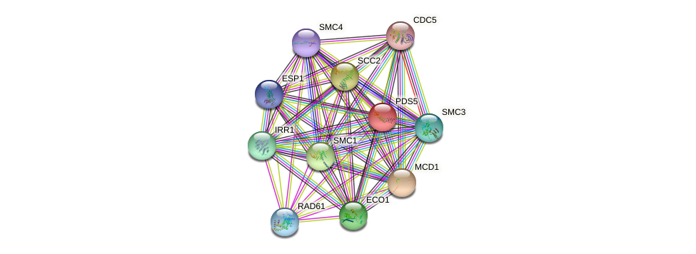 PDS5 protein (Saccharomyces cerevisiae) - STRING interaction network