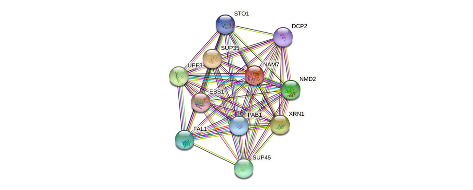 NAM7 protein (Saccharomyces cerevisiae) - STRING interaction network