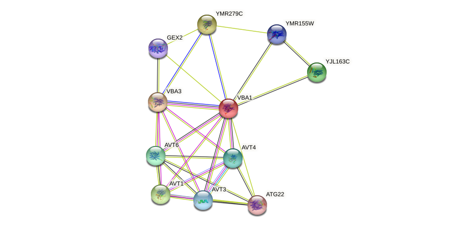 VBA1 protein (Saccharomyces cerevisiae) - STRING interaction network